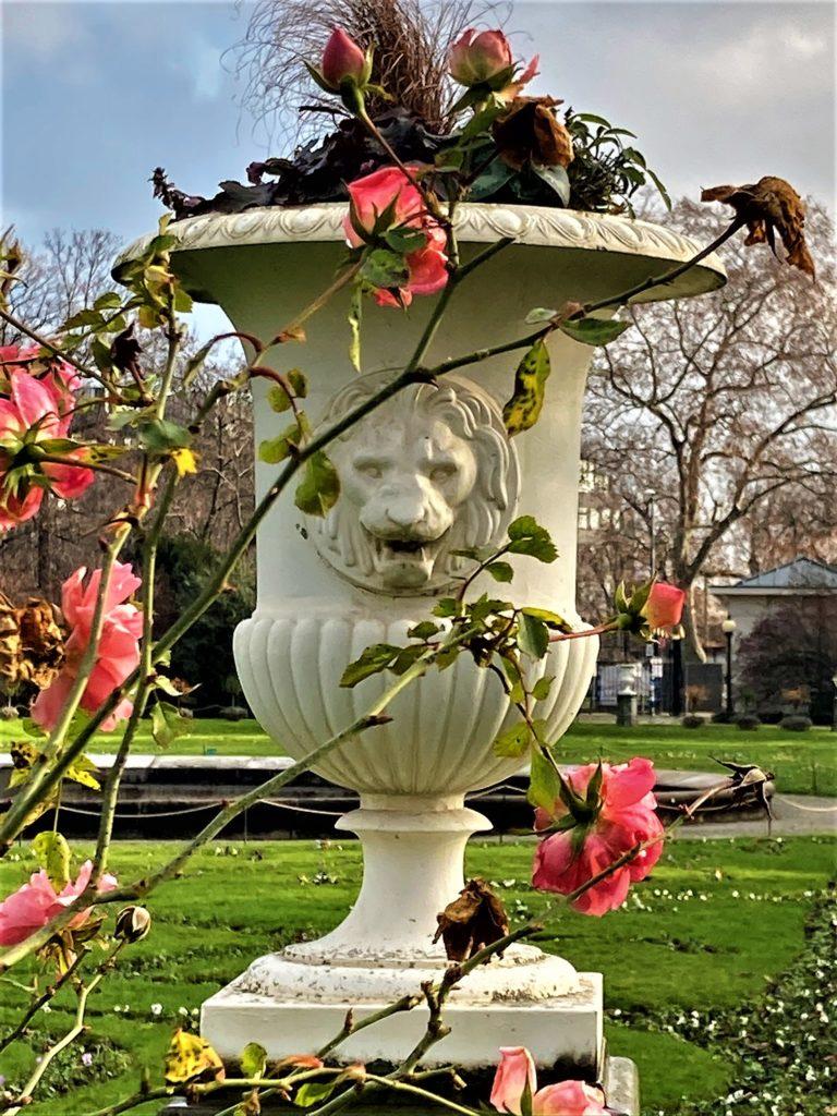 Rosen im Topf mit Löwenkopf