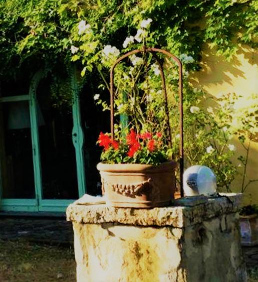 Rote Blumen im Terracotta-Gefäß auf einer Mauer