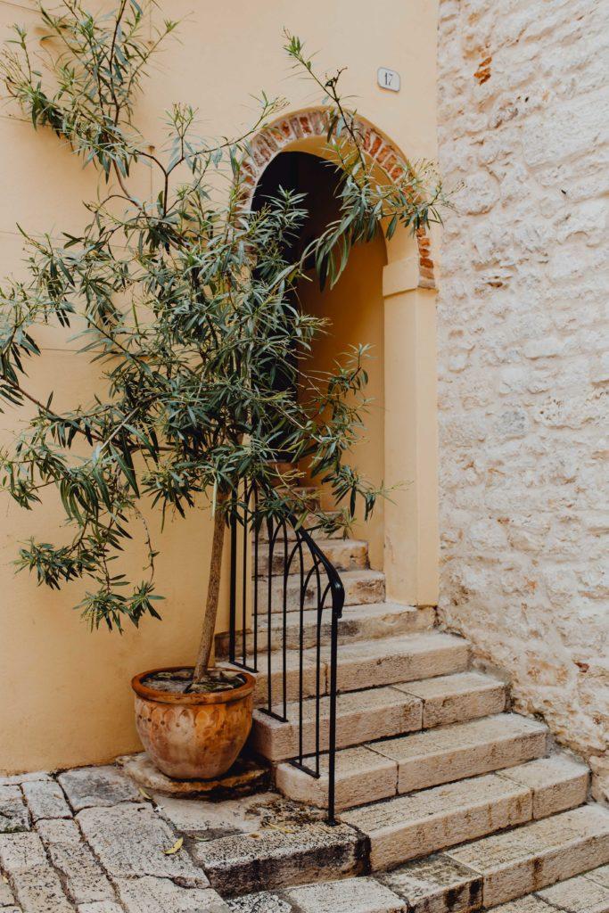 Olivenbaum im Terracotta-Pflanztopf vor Treppengeländer in der Toscana
