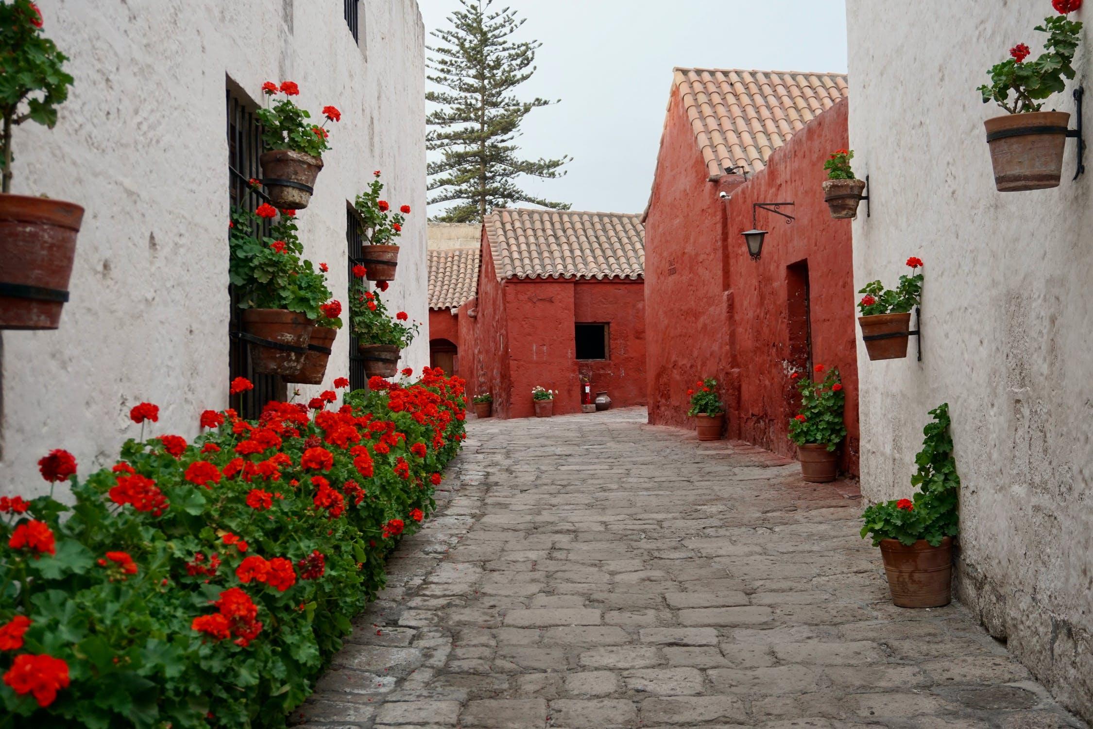 Blühpflanzen in Terracotta